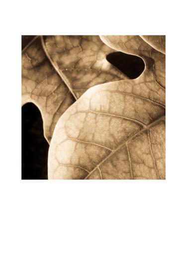 Leaves-Jean-Fran?ois Dupuis-Art Print