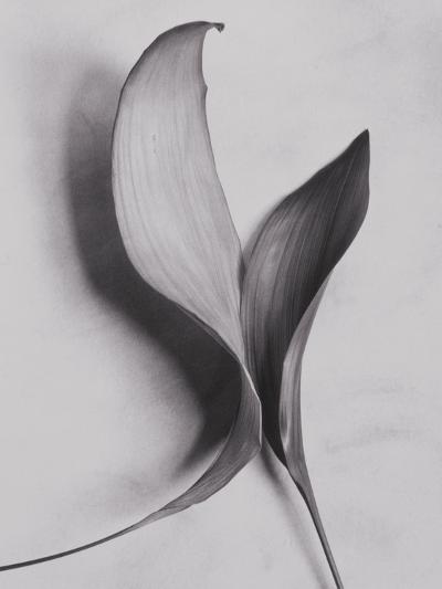 Leaves-Graeme Harris-Photographic Print