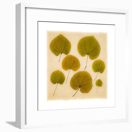 Leaves-Graeme Harris-Framed Premium Giclee Print