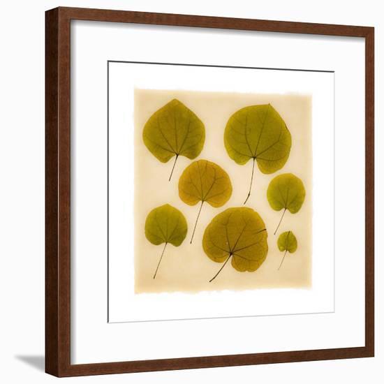 Leaves-Graeme Harris-Framed Giclee Print