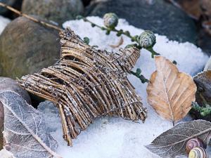 Christmas Nature by Lebens Art