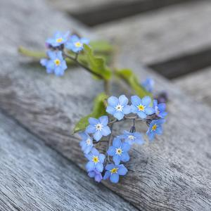 Forget Me Not - Square 2 by Lebens Art
