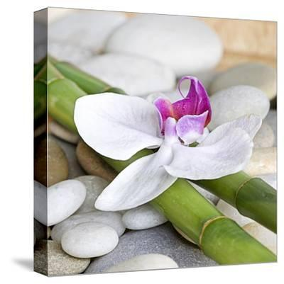 Orchid Bamboo - Square