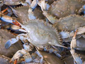 Blue Crabs, Maine Avenue Fish Market, Washington DC, USA, District of Columbia by Lee Foster