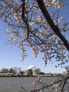 Cherry Blossom Festival, Washington DC, USA, District of Columbia by Lee Foster