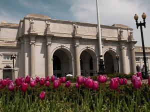 Tulips by Union Station, Washington DC, USA, District of Columbia by Lee Foster