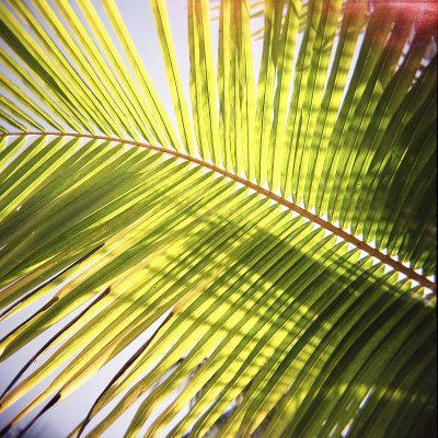 Green Palm Leaves, Jambiani, Zanzibar, Tanzania, East Africa