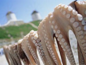 Octopus Drying in the Sun, Mykonos, Cyclades Islands, Greece, Europe by Lee Frost
