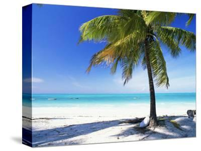 Palm Tree, White Sandy Beach and Indian Ocean, Jambiani, Island of Zanzibar, Tanzania, East Africa