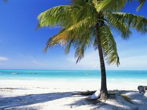 Palm Tree, White Sandy Beach and Indian Ocean, Jambiani, Island of Zanzibar, Tanzania, East Africa by Lee Frost