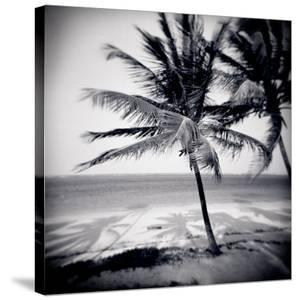 Palm Trees by the Beach at Bweju, Zanzibar, Tanzania, East Africa by Lee Frost