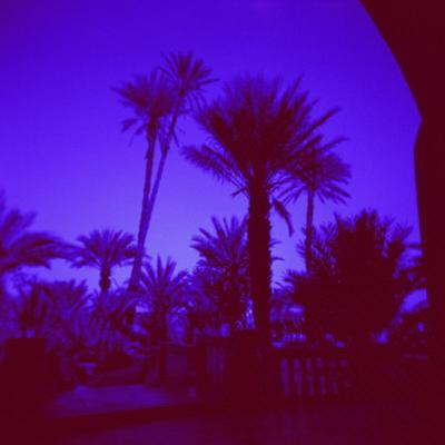 Palm Trees in Silhouette, Photographed Through Blue Glass Window, Ouarzazate, Morocco