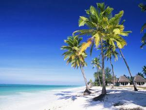 Palm Trees, White Sandy Beach and Indian Ocean, Jambiani, Island of Zanzibar, Tanzania, East Africa by Lee Frost