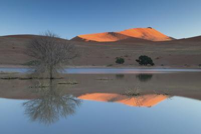 Rising Sun Catching the Summit of Towering Orange Sand Dunes with Reflections by Lee Frost