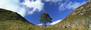 Sycamore Gap, Hadrian's Wall, Near Hexham, Northumberland, England, United Kingdom, Europe by Lee Frost