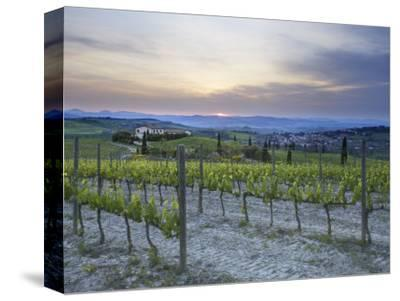 Vineyard at Sunset Above the Village of Torrenieri, Near San Quirico D'Orcia, Tuscany