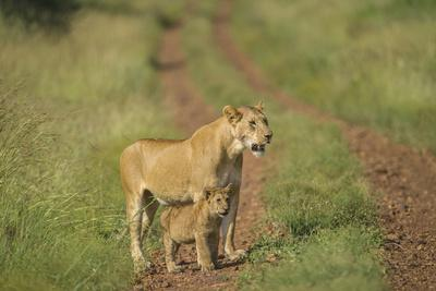 Africa, Lioness and cub