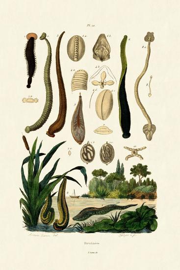 Leech, 1833-39--Giclee Print
