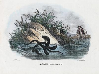 Leeches, 1863-79-Raimundo Petraroja-Giclee Print