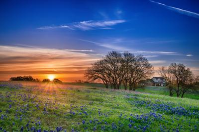 Texas Bluebonnet Wildflower Spring Field at Sunrise by leekris