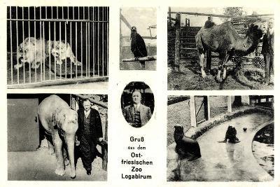 Leer, Ostfriesischer Zoo Logabirum, Löwen, Elefant--Giclee Print