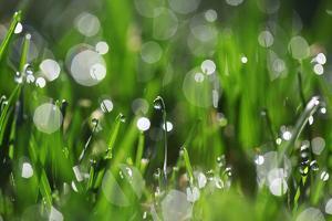 Dew Drops II by Leesa White