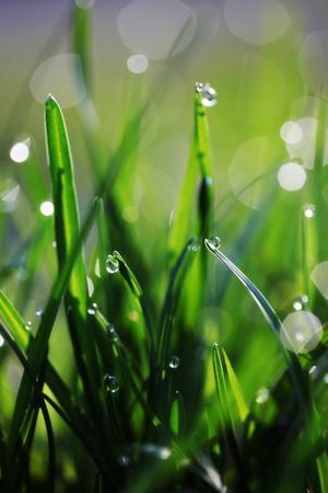 Dew Drops VI