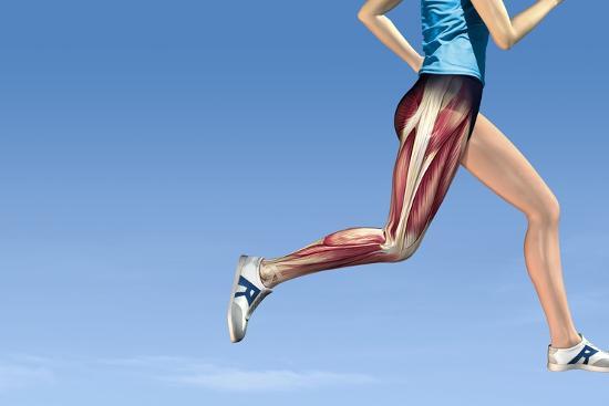 Leg Muscles In Running, Artwork-Henning Dalhoff-Photographic Print
