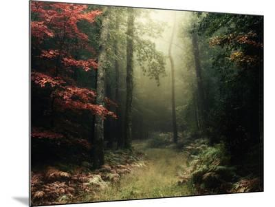 Legendary Forest in Brittany-Philippe Manguin-Mounted Photo