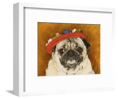Pug Wearing Floral Hat
