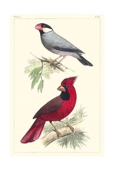 Lemaire Birds I-C.L. Lemaire-Art Print