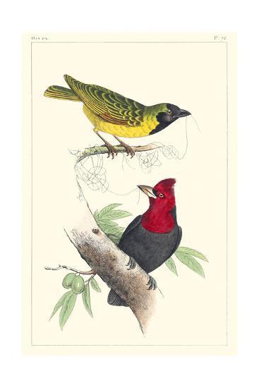Lemaire Birds II-C.L. Lemaire-Art Print