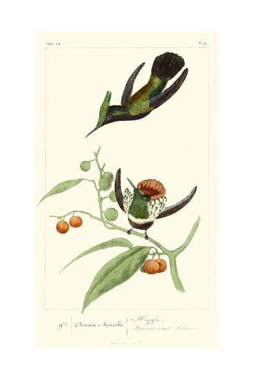 Lemaire Hummingbirds III-C.L. Lemaire-Art Print