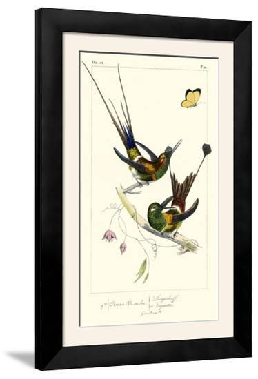 Lemaire Hummingbirds IV-C.L. Lemaire-Framed Photographic Print