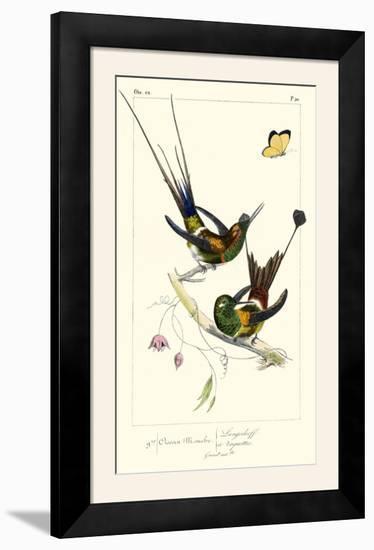Lemaire Hummingbirds IV-C.L. Lemaire-Framed Photographic Print