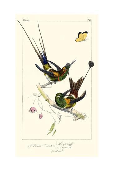 Lemaire Hummingbirds IV-C.L. Lemaire-Art Print