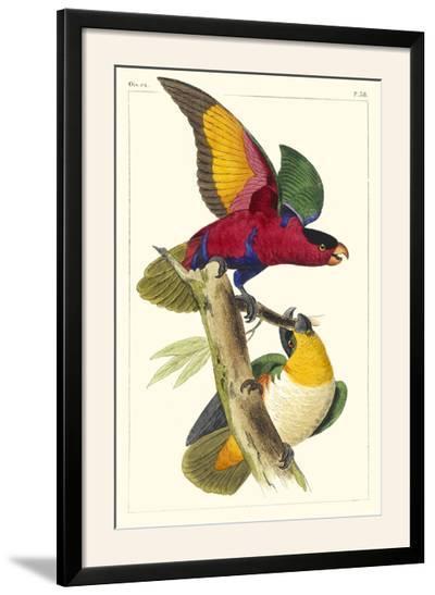 Lemaire Parrots I-C.L. Lemaire-Framed Photographic Print