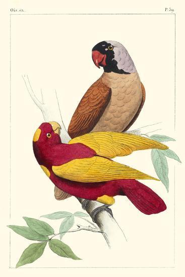 Lemaire Parrots II-C.L. Lemaire-Art Print