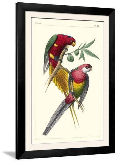 Lemaire Parrots III-C.L. Lemaire-Framed Photographic Print