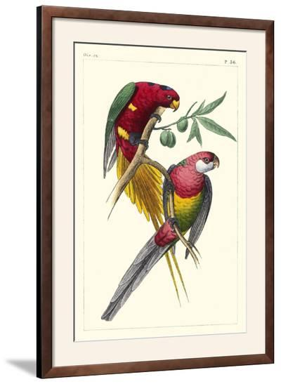 Lemaire Parrots III-C.L. Lemaire-Framed Photographic Print