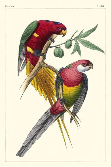Lemaire Parrots III-C.L. Lemaire-Art Print
