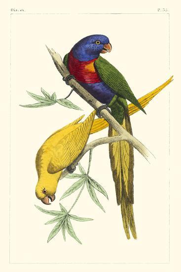 Lemaire Parrots IV-C.L. Lemaire-Art Print