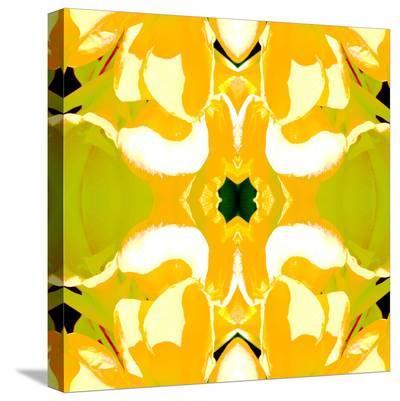 Lemon Canna-Rose Anne Colavito-Stretched Canvas Print