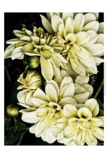 Lemon Dahlias I-Rachel Perry-Art Print