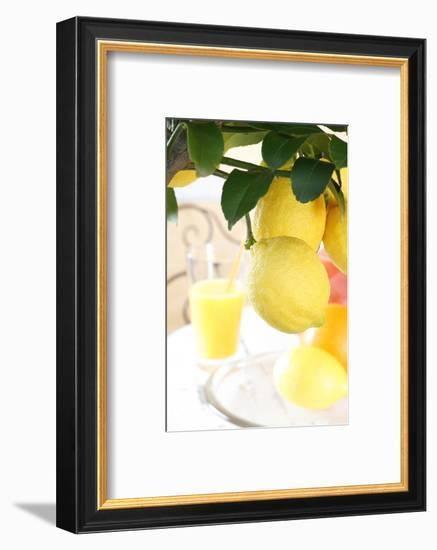 Lemon on a Branch, Citrus Limon-Sweet Ink-Framed Photographic Print
