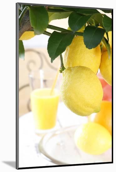Lemon on a Branch, Citrus Limon-Sweet Ink-Mounted Photographic Print