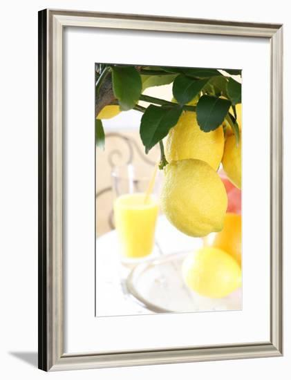Lemon on a Branch, Citrus Limon-Sweet Ink-Framed Photographic Print
