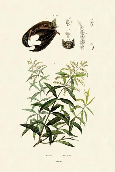 Lemongras, 1833-39--Giclee Print