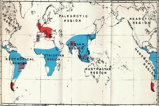 'Lemuroidea - IV. Map, Showing distribution of Living (Blue) and Fossil (Red) Anthropoidea ', 1897-Unknown-Giclee Print