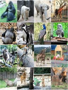 Collage Of Different Animals by LeniKovaleva